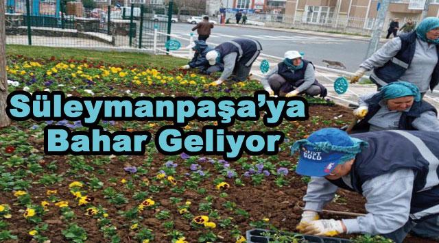 tekirdağ Süleymanpaşa'ya Bahar Geliyor