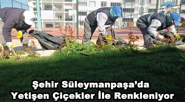 tekirdağ Şehir Süleymanpaşa'da Yetişen Çiçekler İle Renkleniyor