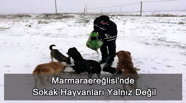 tekirdağ Marmaraereğlisi'nde Sokak Hayvanları Yalnız Değil