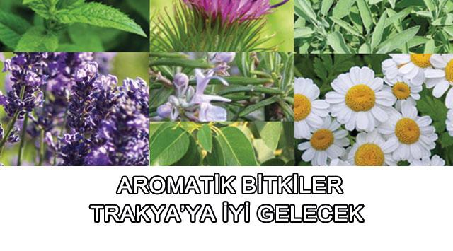 tekirdağ Aromatik Bitkiler Trakya'ya İyi Gelecek