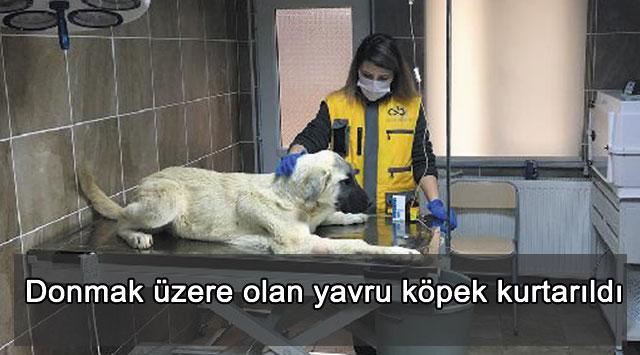 tekirdağ Donmak üzere olan yavru köpek kurtarıldı