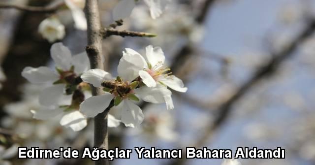 tekirdağ Edirne'de Ağaçlar Yalancı Bahara Aldandı