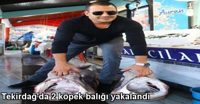 tekirdağ Tekirdağ'da 2 Köpek Balığı Yakalandı
