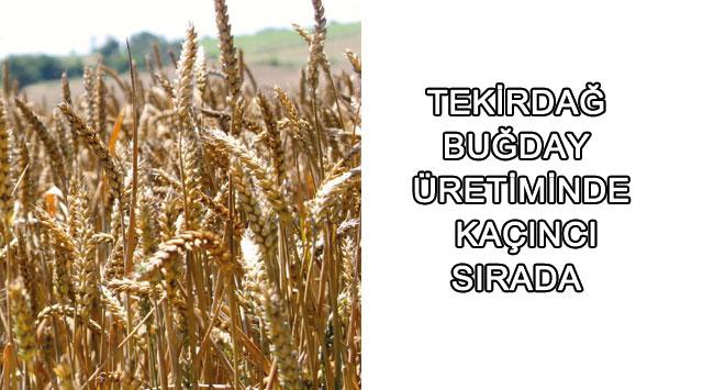 tekirdağ Tekirdağ Buğday üretiminde 8. Sırada