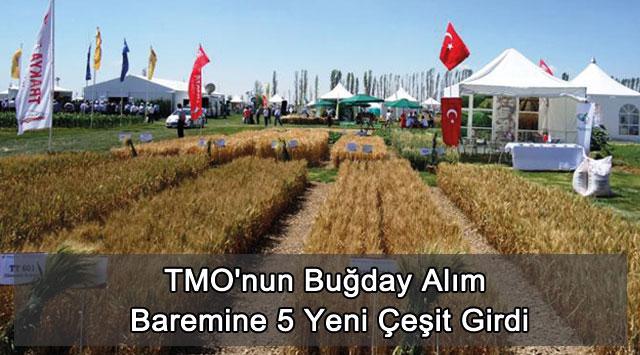 tekirdağ TMO'nun Buğday Alım Baremine 5 Yeni Çeşit Girdi